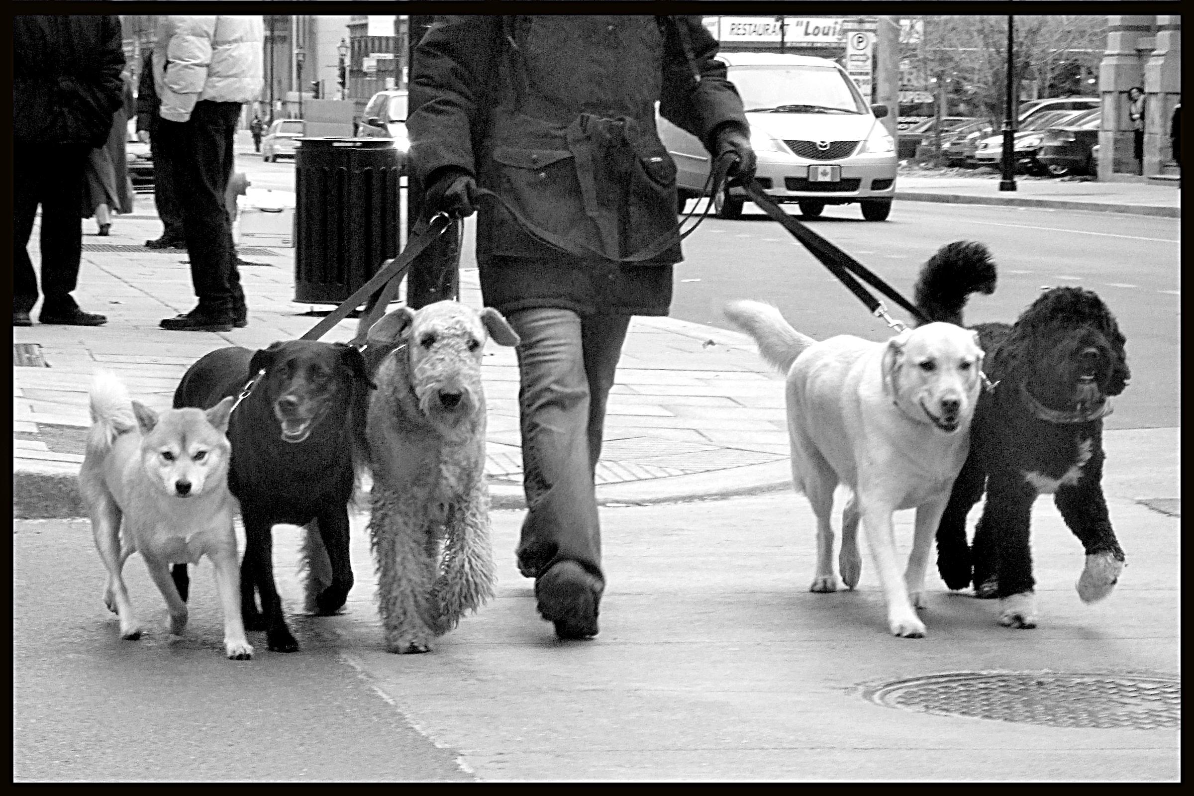 5 chiens