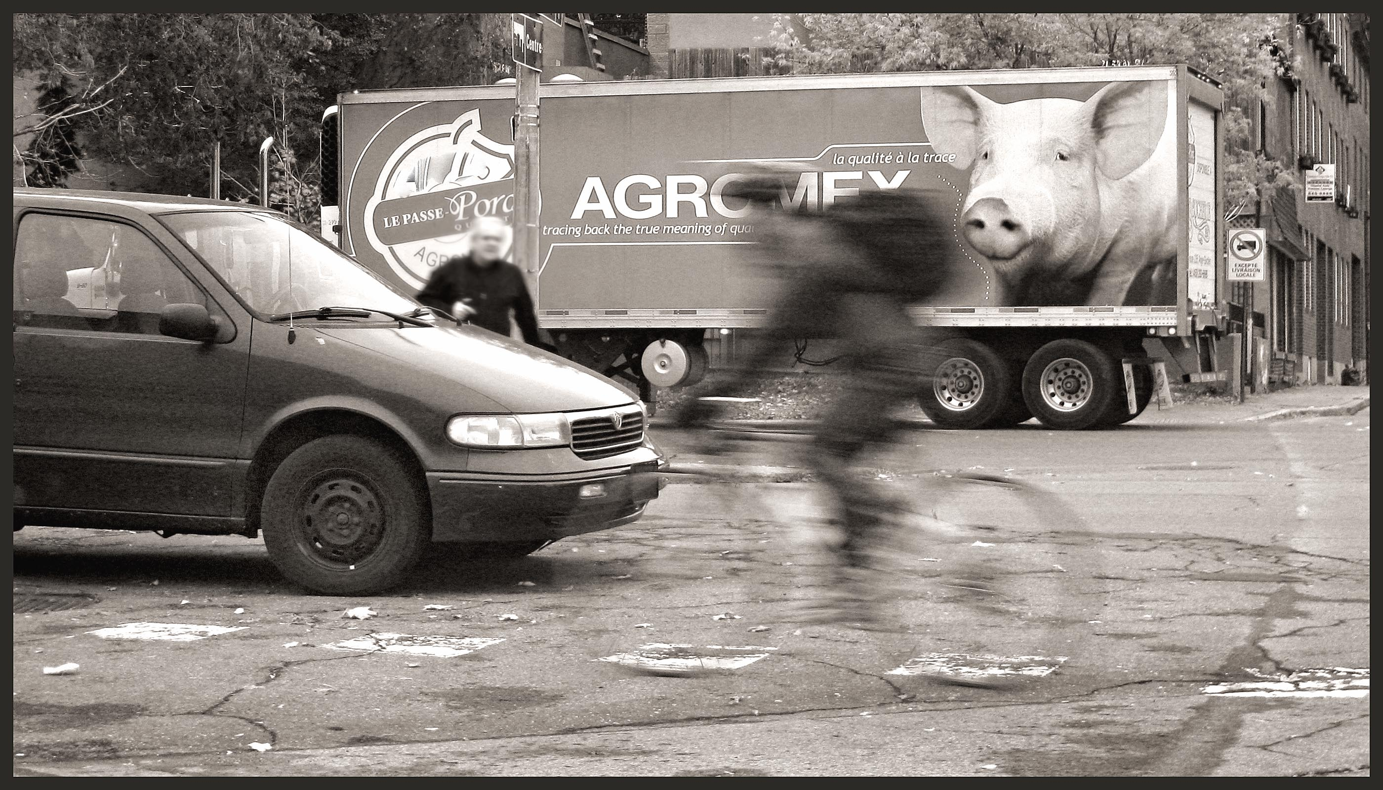 camion cochon